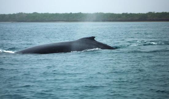 whale-1