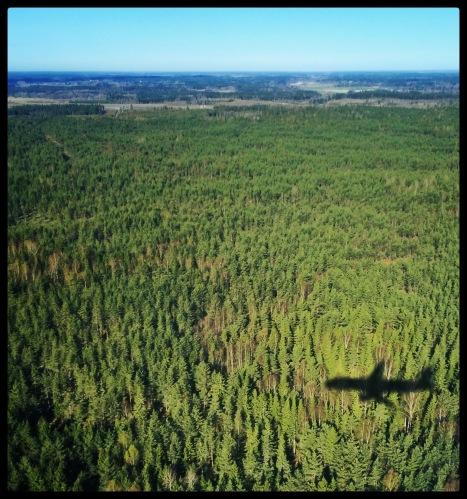 forestplane
