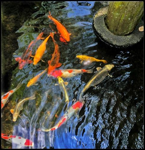 junglefish-2