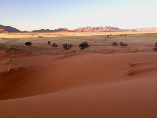 dune-elim-2
