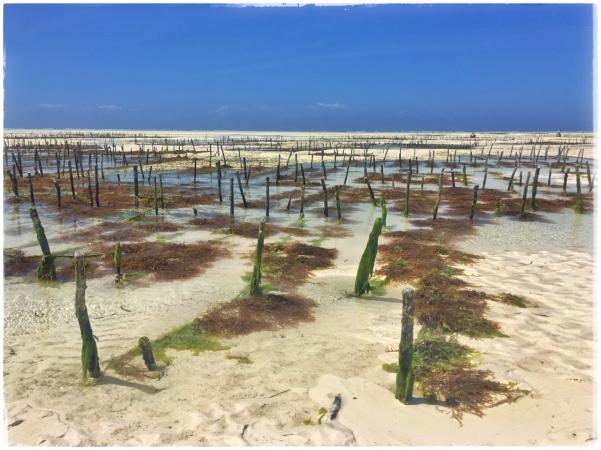 seaweedfarm