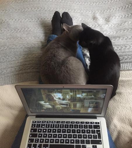 cats-2