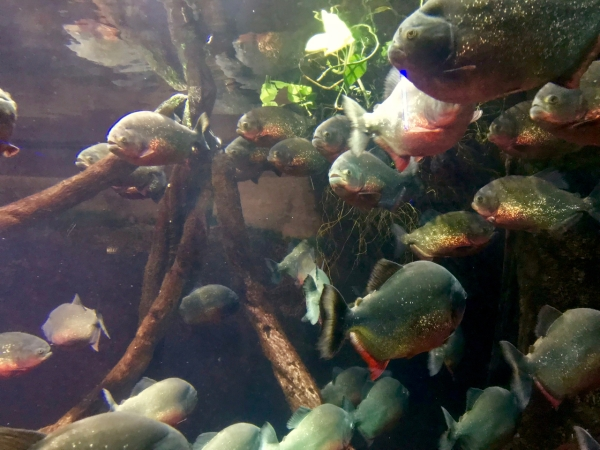 genoa-aquarium-1
