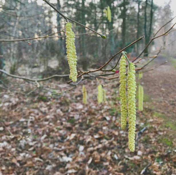 Brandebacks-spring-2