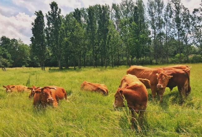 cowsdk