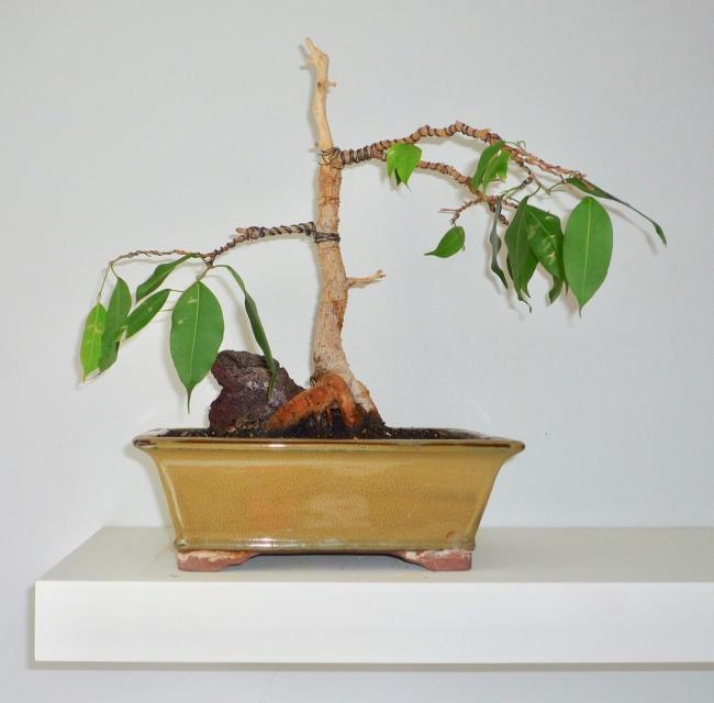 bonsai2012